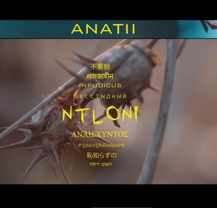 Anatii – Ntloni
